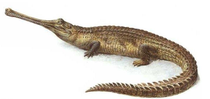 картинки про крокодилов