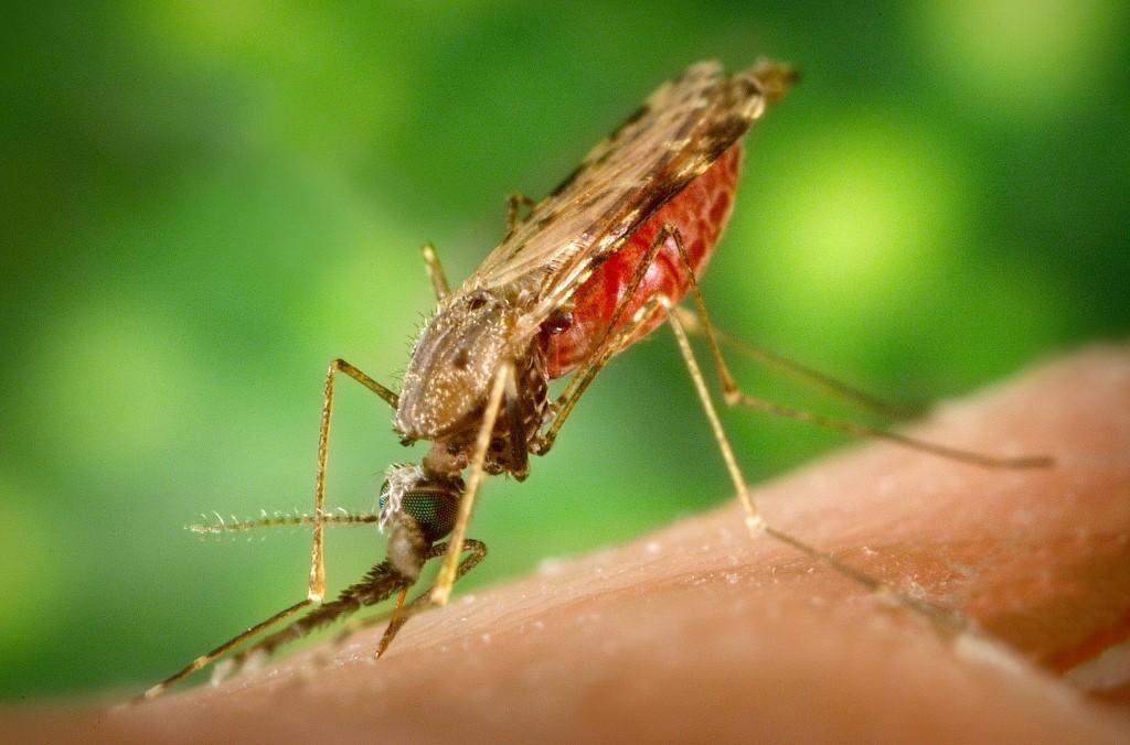 эффективное лекарство от паразитов