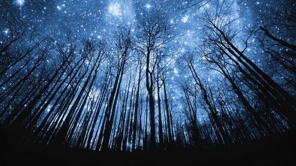 В небе над Новосибирском идут звездные дожди