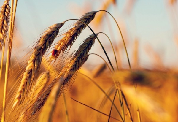 Обратившаяся к Путину девушка-фермер получала помощь от властей - Правительство