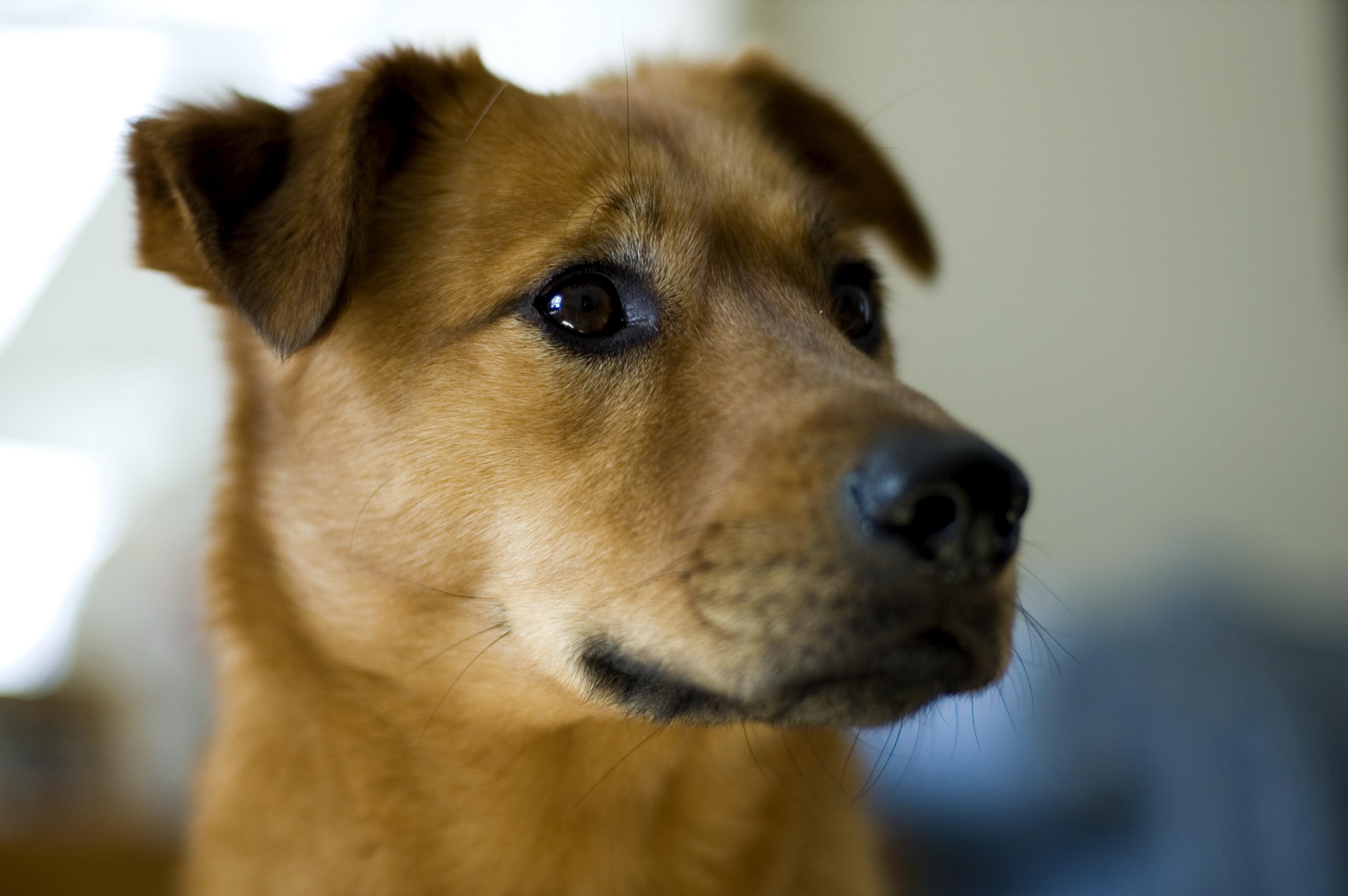 Ученые Первыми приручили собак жители Центральной Азии