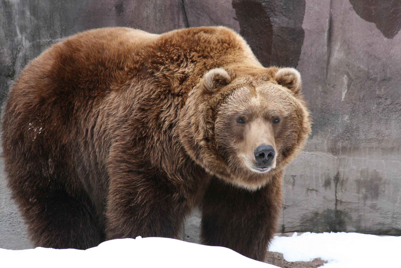 Дети и медведи 35