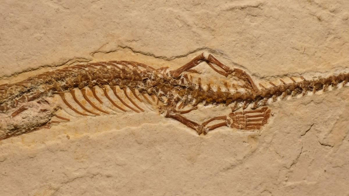Ученые Змеи в процессе эволюции потеряли ноги и стали ползать по земле