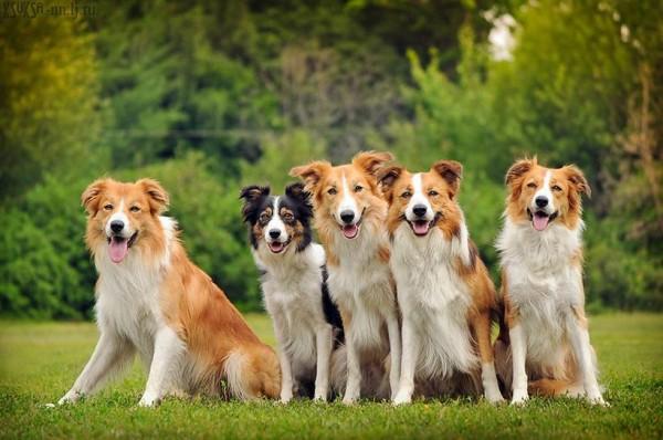 Собака-мэр поделилась предвыборной программой на пост президента США
