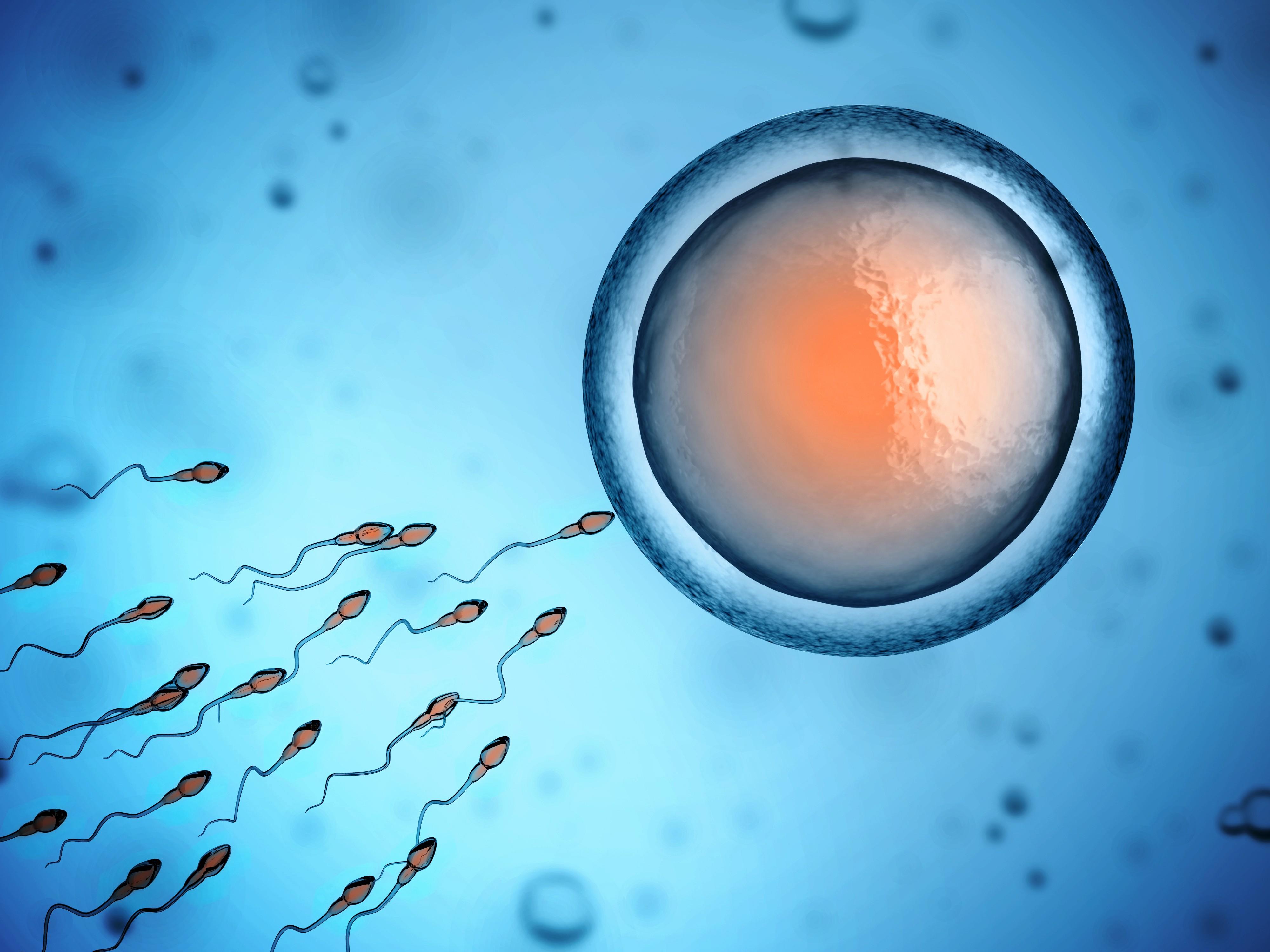 stoimost-donorskoy-spermi