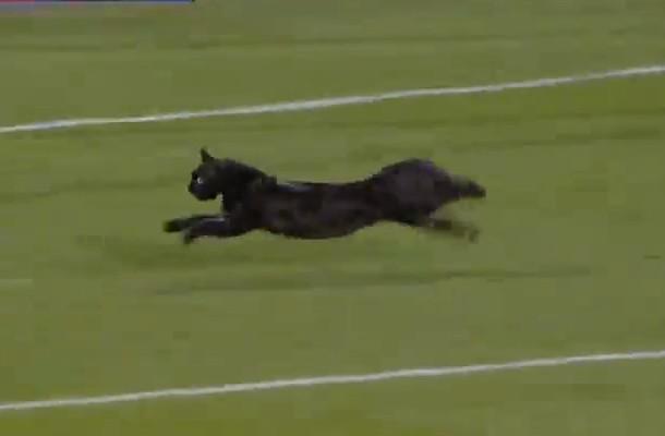 Пробежал черный кот