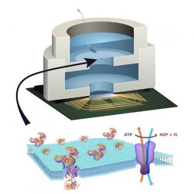 Ученые: Изготовлен первый в мире биочип