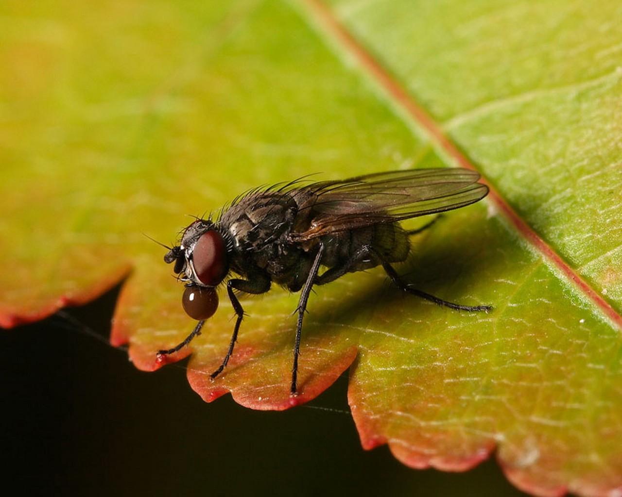 Ученые уверены, что масло насекомых можно использовать в качестве источника омега-3