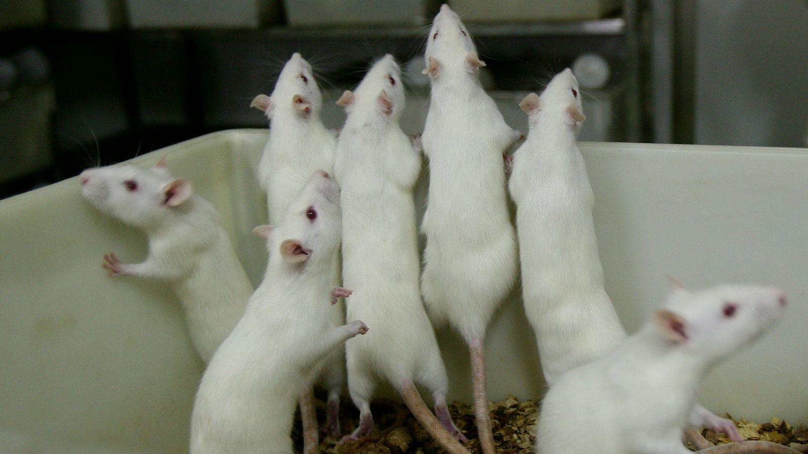Ученые Агрессия способствует появлению новых нервных клеток