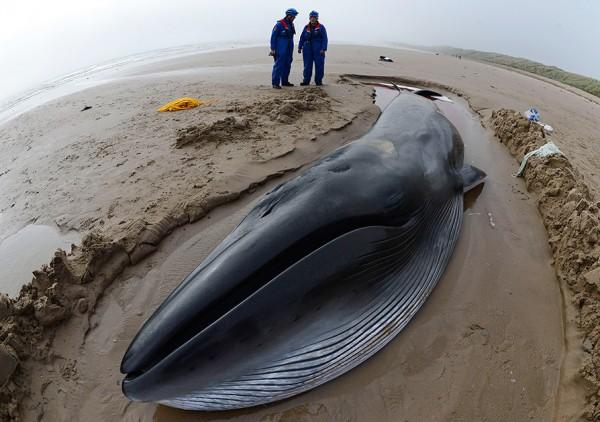 Российские подлодки убивают китов – Британские СМИ