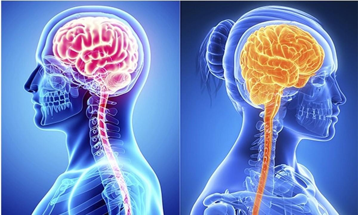 Американские учёные: Женщины используют собственный мозг действеннее, чем мужчины