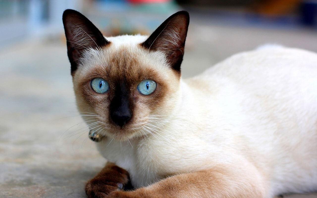 Картинки по запросу Кошки в Новой Зеландии