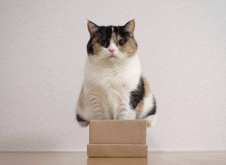 В Англии впочтовой посылке отыскали живую кошку