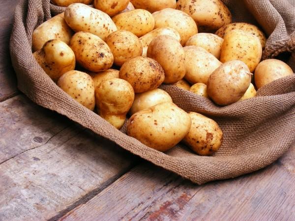 Ученые: ГМО продукты выращиваются в Белоруссии исключительно в научных целях