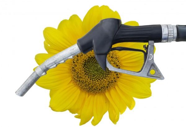 Ученые: Биотопливо наносит вред окружающей среде
