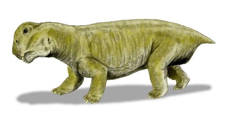 Как выжили напланете древнейшие листрозавры вусловиях массового вымирания— знают учёные