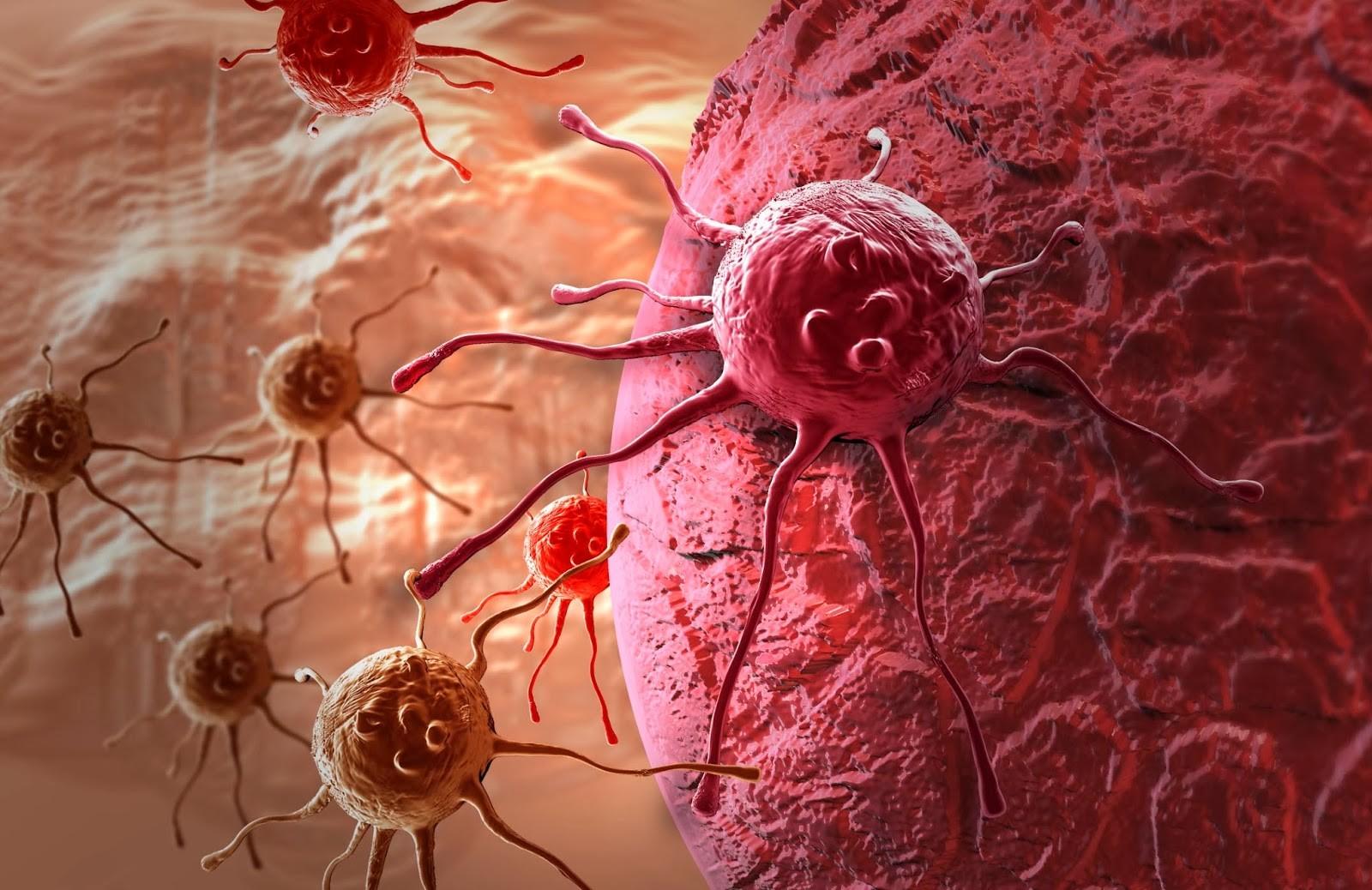 Иммунные клетки человека помогают восстанавливаться мозгу после инсульта