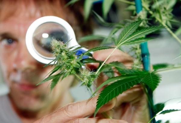 Ученые доказали генетическую предрасположенность к зависимости от марихуаны