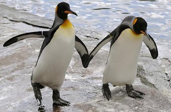Пару пингвинов-геев выгнали из Берлинского зоопарка