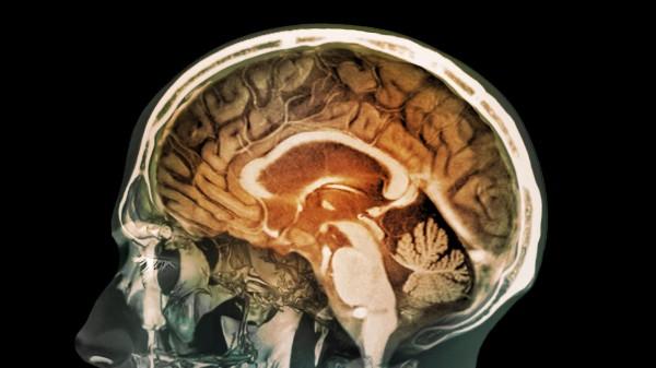 Учёные: Сканер мозга может заменить сканер отпечатков пальцев