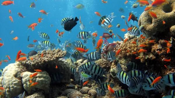Учёные: Глубоководное биоразнообразие в опасности из-за изменения климата