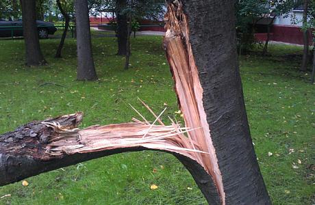 ВЧелябинске ветка дерева чуть неубила ребенка