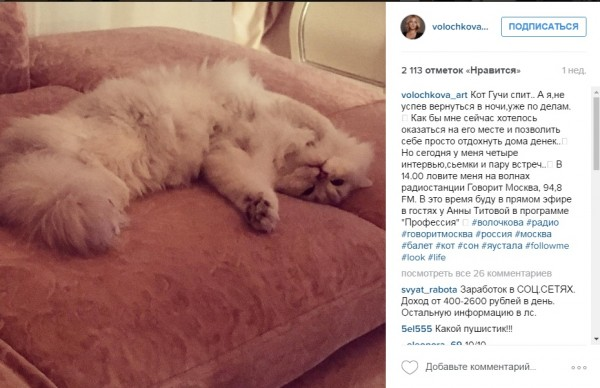 Волочкова оплакивает своего кота, который погиб из-за врачебной ошибки
