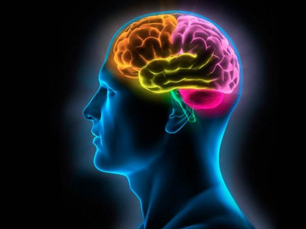 Ученые заявили, что за повседневные решения отвечает отдельная часть мозга