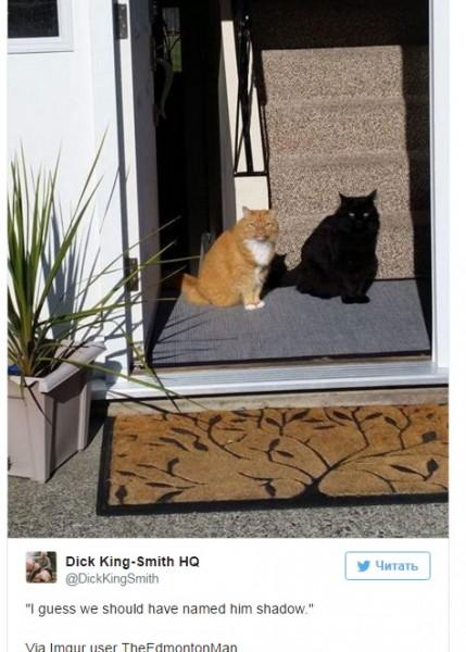 Пользователи интернета изумились загадочному фото кота и его «живой тени»