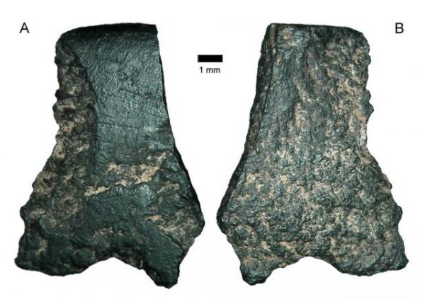 Самый древний топор нашли учёные-археологи в Австралии