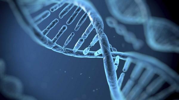 В США ученые на секретном совещании обсудили изменение генома человека