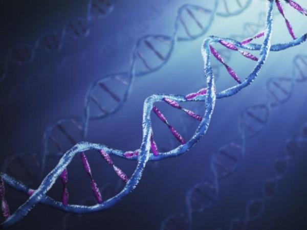 Правительство Японии разрешило генетическую модификацию человеческих эмбрионов