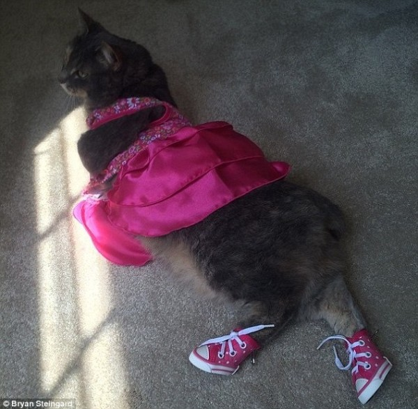 Кошка заменила американцу девушку для выпускного бала