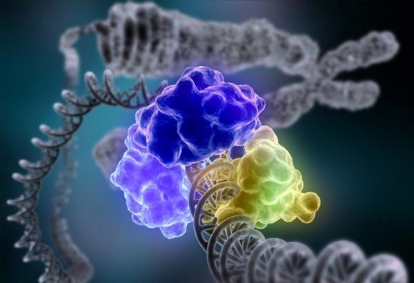 Учёные нашли два фермента, разрушающих биопленки