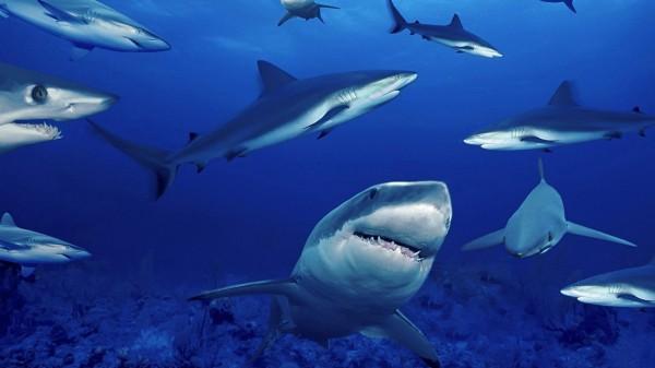 Ученые доказали, что акулы обладают признаками личности
