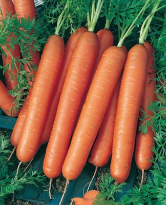 Учёные назвали морковь суперпродуктом