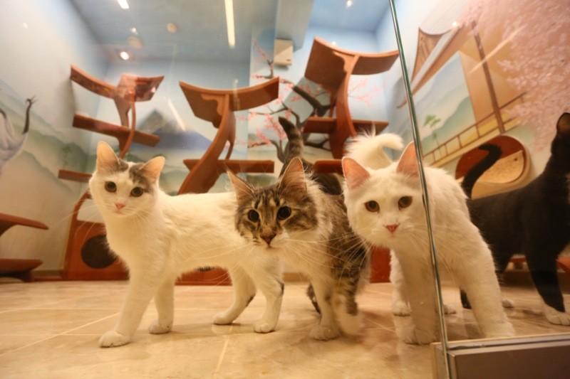 Куклачев создаст отдельное государство для кошек