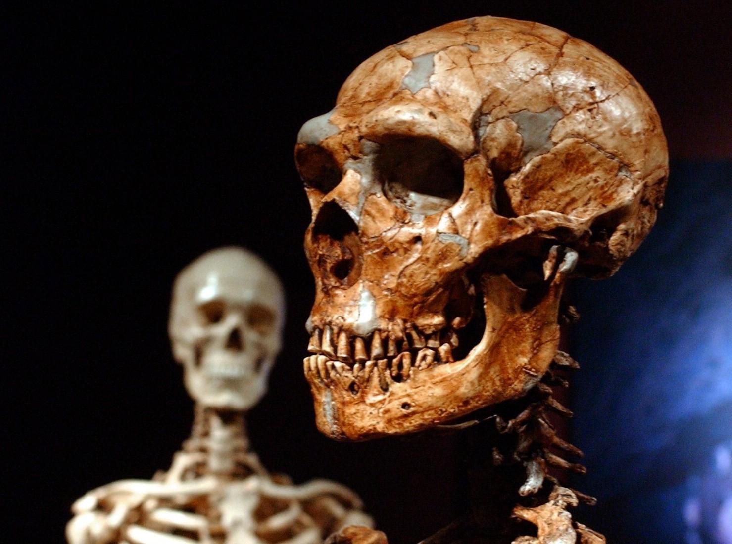 Ученые: Человек унаследовал отнеандертальцев плохие гены