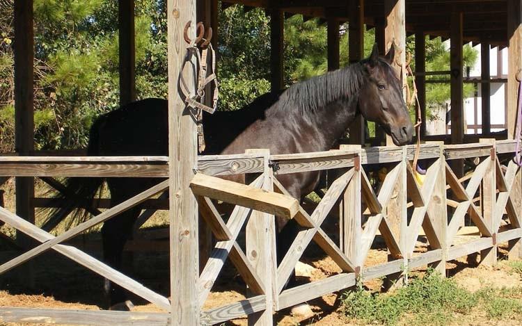 Денники для лошадей своими руками 776