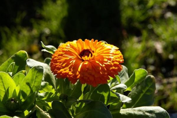 Растения могут побороть стрессовые ситуации
