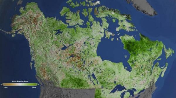 NASA изучает озеленение Арктики