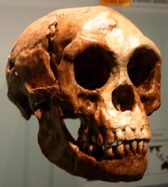 В Индонезии найдены предки знаменитых ископаемых хоббитов