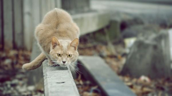 Ученые: Кошкам под силу предугадать появление объекта на основе шума