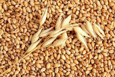 Ученые: Употребление зерна снижает риск ранней смерти