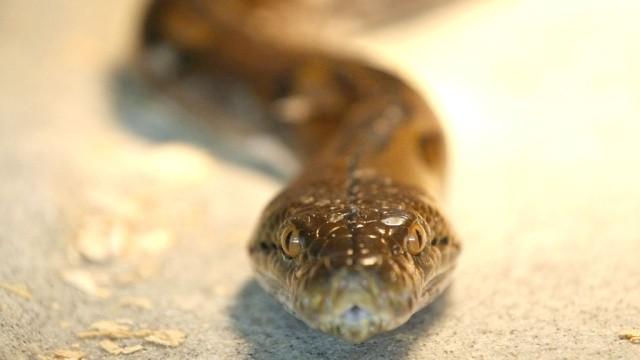 Спасатели поймали змею, заползшую в квартиру жительницы Новосибирска