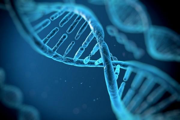 В США начнут проводить опыты по генетической модификации человека