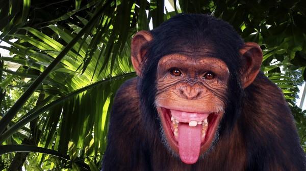 Ученые: Шимпанзе способны создать микроволновую печь
