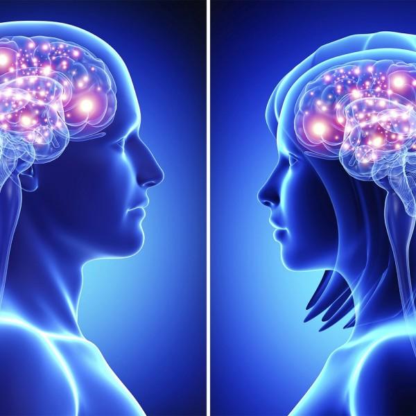 Учёные: Мозг мужчин и женщин отличается друг от друга