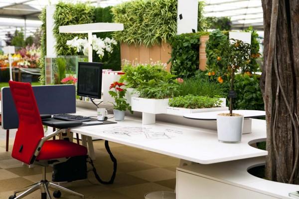 Ученные сообщили о благоприятном влиянии комнатных растений в офисах