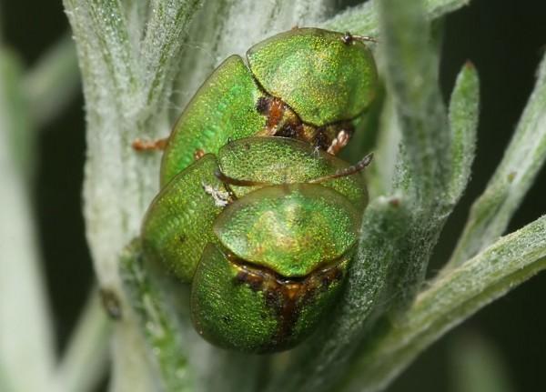 Внушительное достоинство жуков позволило сделать прорыв в медицине